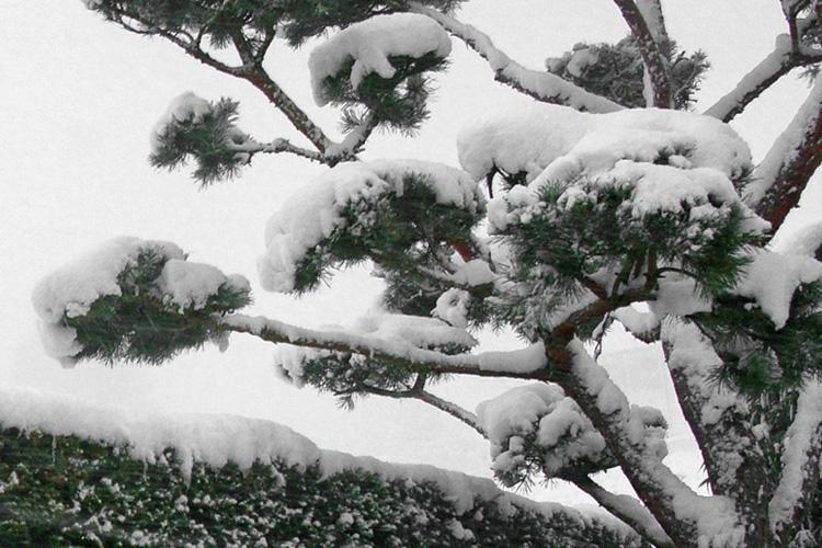 Hufschmid gartenbau ag gartenpflege - Winter gartenbau ...